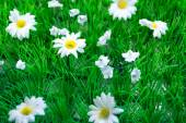 Plastic Grass and Flowers (2) — Stock Photo
