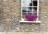 Purple Flowers in Window Box — Stock Photo