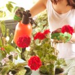 Woman caring about flowers — Stock Photo #72050473