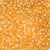 Corn Texture — Stock Photo