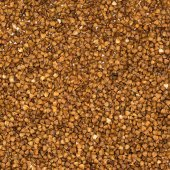 Dry buckwheat grains — Foto de Stock
