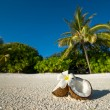 Opened coconut on the sandy beach of tropical island — Stock Photo #63520395