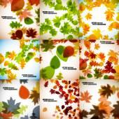 Autumn backgrounds — Stock Vector