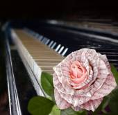 Music symbol. Beautiful pink rose with note on the piano keyboard — Stock Photo