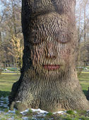 Woman's face embedded in the bark of the tree — Stock Photo