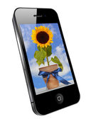 Mobile phone image on the screen - sunflower — Stockfoto