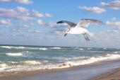 Lonely seagull flying — Stock Photo