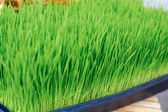 Wheat Grass For Sale — Stock Photo