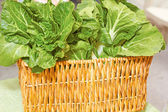Leafy Green Spinach — Stock Photo