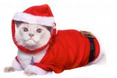Santa Claus Cat — Stock Photo