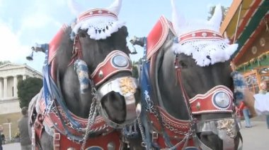 Decorated Oktoberfest Horses — Stock Video