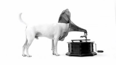 Jack Russell Terrier and gramophone — Stock Video