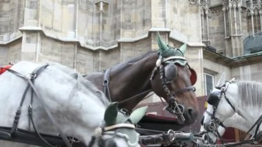 Horse Carriage Vienna — ストックビデオ