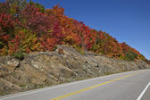 Highway with maple leaves — Stock Photo