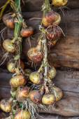 Season of harvest, plaited onions dried on a background of woode — Stock Photo