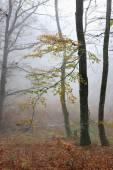 Autumn foggy forest — Stock Photo