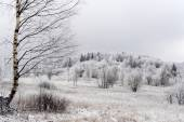 Frozen trees in Carpathians — Foto de Stock