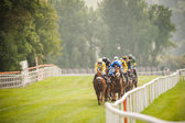 Horse race coming down the track — Stock Photo