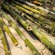 Bamboo cylindrical, yellow, dry, green, bamboo pile. — Stock Photo #64742433