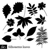 Set of Leaf Silhouettes. Isolated on white. — ストックベクタ