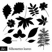 Set of Leaf Silhouettes. Isolated on white. — Stockvektor