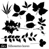 Set of Leaf Silhouettes. Isolated on white. — Vector de stock
