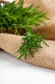 Tied fresh rosemary on the burlap, over white background — Stok fotoğraf