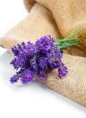 Lavender flowers on the burlap, over white background — Stockfoto