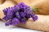 Lavender flowers on the burlap, over white background — Stok fotoğraf