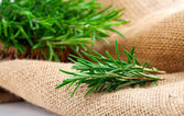 Tied fresh rosemary on the burlap, over white background — Stock Photo