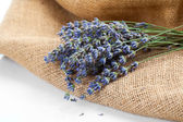Lavender flowers on the burlap, over white background — Stock Photo