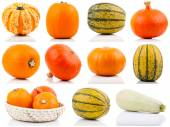 Set of colorful pumpkins on white background — Stock Photo
