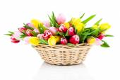 Colorful tulip blooms in a basket isolated on white — Stock Photo