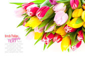 Colorful tulip blooms isolated on white — Stock Photo