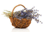 Dry lavender flower in a basket, isolated on white background — Foto de Stock