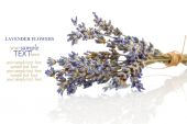 Dry lavender flower, isolated on white background — Foto de Stock