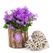 Blue campanula flowers for Valentine's Day with wooden heart, on — Stock Photo #62607323