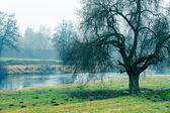 Beautiful morning mist landscape near a small river. — Stock Photo