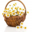 Beautiful camomile flowers in basket, isolated on white — Stock Photo #66154784