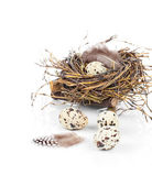 Quail eggs on white background — Stock Photo