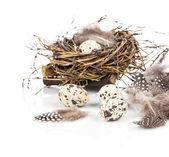 Quail eggs on white background — Stock Photo