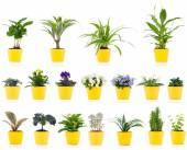 Set of green house plant, isolated on white background — Stock Photo