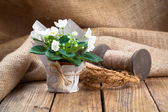White Saintpaulias flowers in paper packaging, on sackcloth, woo — Foto Stock