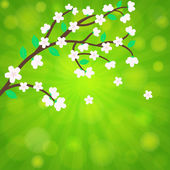 Cherry blossom, sakura branch with  flowers.  card vector template — Vector de stock