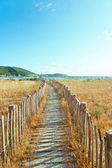 夏季 landscapece — 图库照片