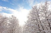 Winter in switzerland — Foto Stock
