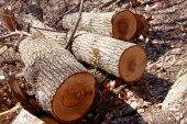 Three pieces of tree — Stock Photo