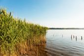 Lake and cane thicket — Stock Photo