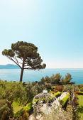 Sea and a garden view — Stock Photo