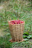 Fresh raspberry in basket — Stockfoto